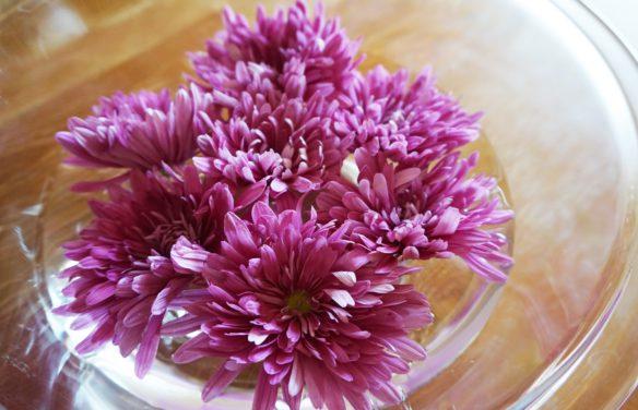 食用菊イメージ