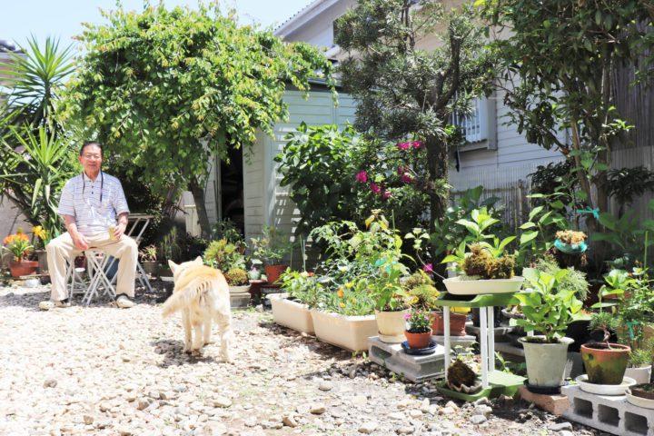 パセリの生えている実家の庭